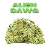 GT Alien Dawg 8th