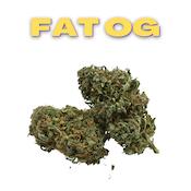 GT Fat OG 8th