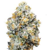 Alien Labs [IN] Baklava Flower (H) 3.5g
