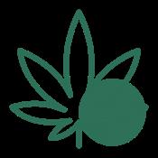 CANNABIOTIX - Cereal Milk - 3.5g - Flower